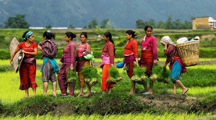Tea farmers assured of minimum price
