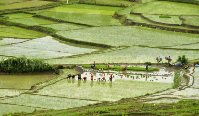 Govt starts purchasing paddy from farmers