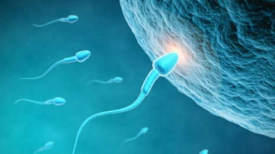 Sperm count not harmed by Covid-19 vaccine, study says